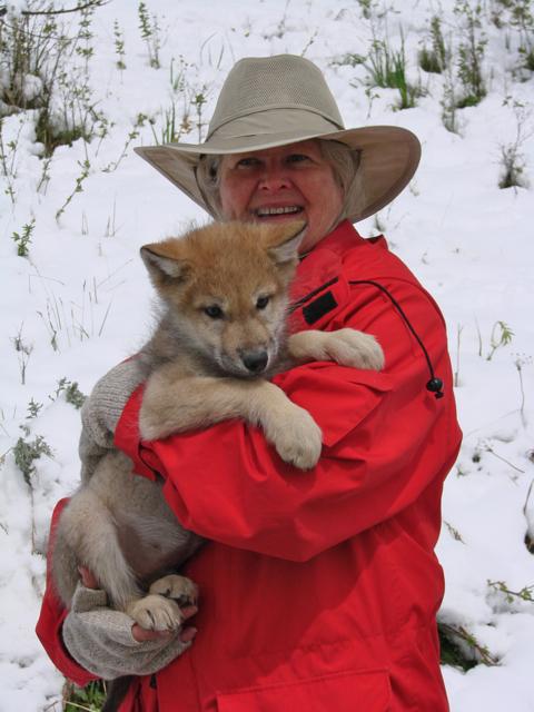 Ivanie holding wolf pup